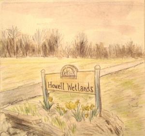 Howell Wtlnds daffodil sketch 003